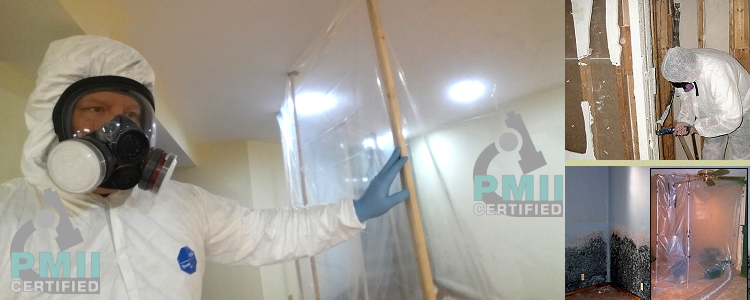 Mold Training Course